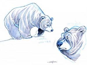 Recherche d'ours